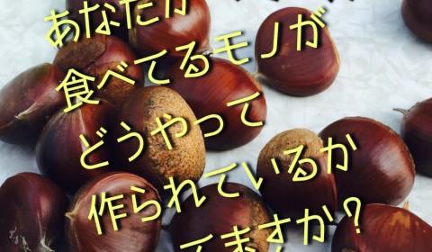 【シリーズ】あなたが食べてるモノがどうやって作られているか知ってますか?