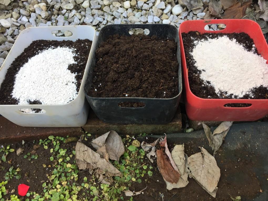 ビタミン菜 苗床(左から:卵の殻・発酵堆肥・小麦全粒粉)