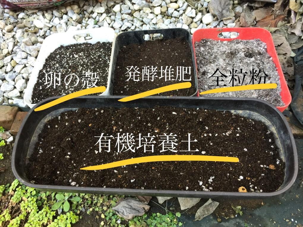 ビタミン菜 苗床(全4種)