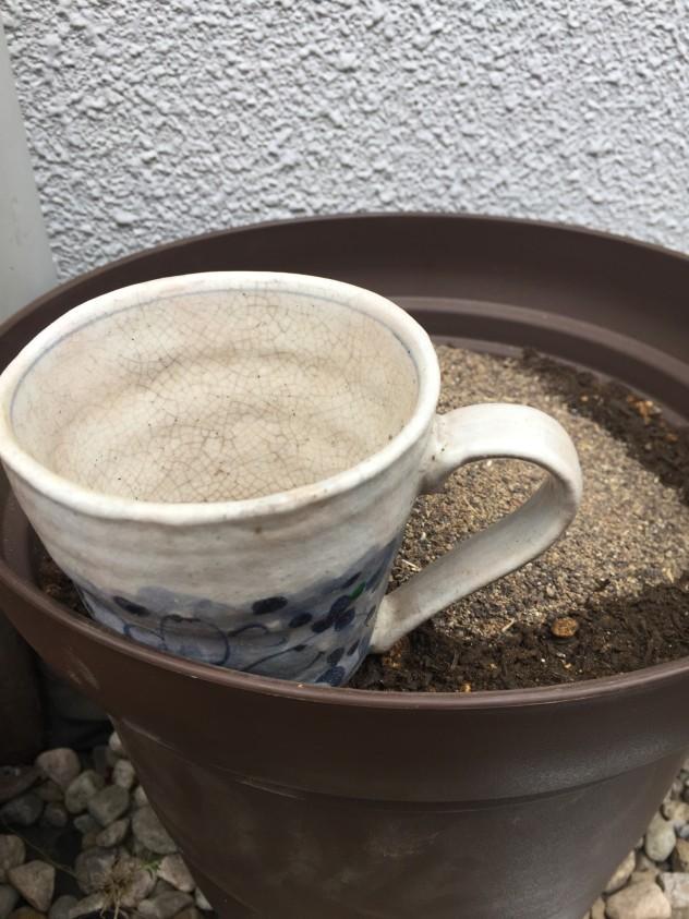 トマト苗|肥料を計量したカップ