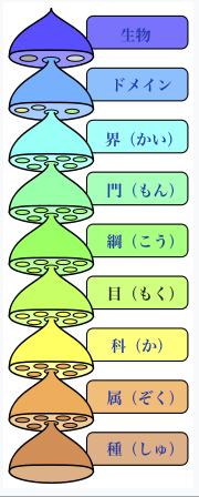 リンネ式階級分類