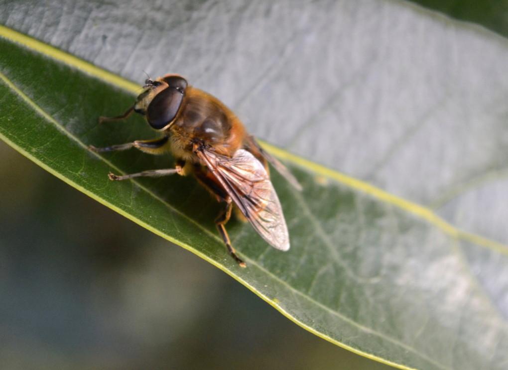 早朝の動きが鈍い蜂